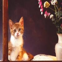 рыжий домашний котенок за стеклом