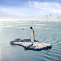 королевский пингвин на глыбе льда