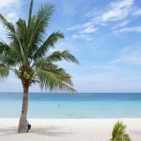 кокосовая пальма негр девушка в воде