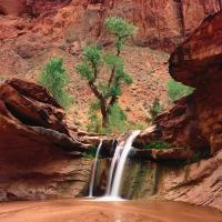 красный скалы в красной пустыне с зеленым деревом и водопадом