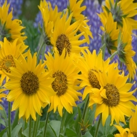 обои об различных цветочках разнообразных сортов