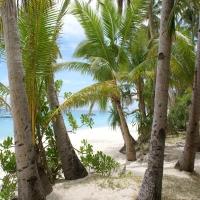 тропический лес выход к морю