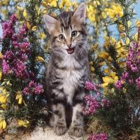 кошачий разговор полосатый кот
