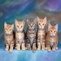 армия маленьких рыжих и серых котят