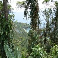 деревья лес филиппины