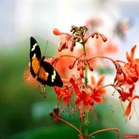 Потрясающий вид на идеальный мир, незапятнаная природа, где не ступала нога человека