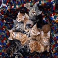 очень много котят в корзине