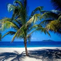 виргинские острова пальма на пляже с белым песком