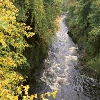 бурный водный поток в желтом лесу панорама и перспектива