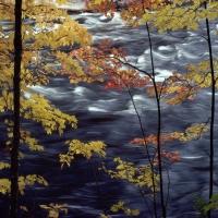 осенний кленовый лес над белой быстрой водой