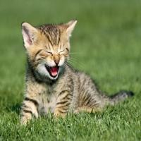 котенок кричит и зовет маму