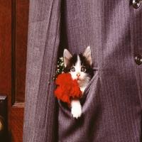 кот с цветами в кармане полосатого пиджака