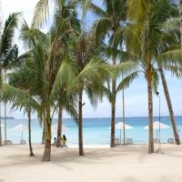 финиковые пальмы и девушки