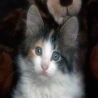 котенок с зелеными глазами спрашивает