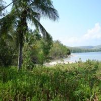 филиппины пальма море пляж
