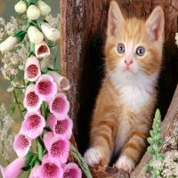 в дупле рыжий кот а рядом розовые орхидеи