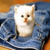 кремовый с бежевым кот в синих джинсах