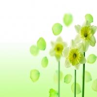 тема об различных цветочках разнообразных оттенков