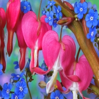 зарисовка об разнообразных цветах различных сортов