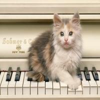 маленький рыжий с белым котенок на рояле sohmer new-yourk