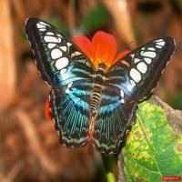 Шикарный вид на прекрасный мир, девственно чистая природа, где никогда не было людей