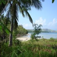 островная флора