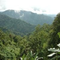 высоко в горах на юге тропики лес пальмы туман