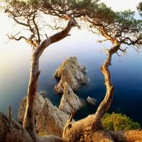 корявое старое дерево над водой