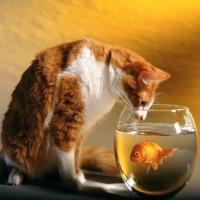 рыжий кот и золотая рыбка в банке