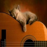 кремовый котенок спит на гитаре