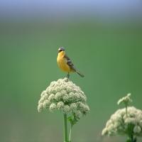 желтая маленькая птичка на цветке