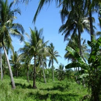 маленькие пальмы тростник голубое небо