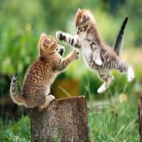 два кота на дереве дерутся