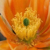 тема о разнообразных цветочках разных оттенков