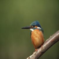 оранжевая птица с длинным клювом на толстом суку