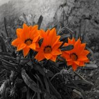нарисовано в 3d, стильная фото в стиле техно, изображены нереальные цв